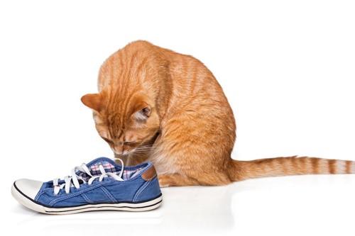 飼い主の靴の匂いを嗅ぐ猫