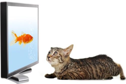 金魚を見る猫