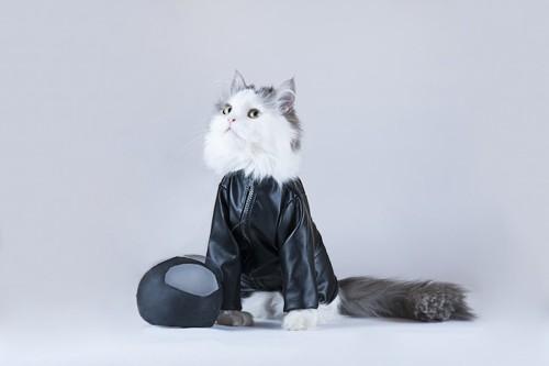 ライダー風の衣装を着たバイク好きな猫