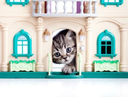 小さなハウスから顔を出す子猫
