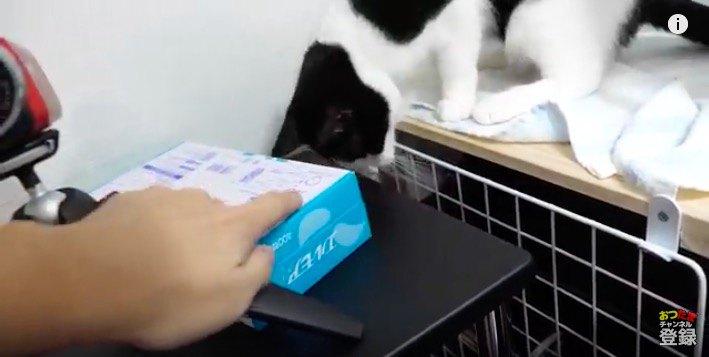それがきになる同居猫