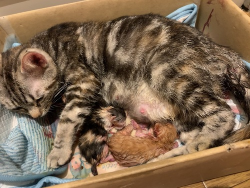 出産直後の写真