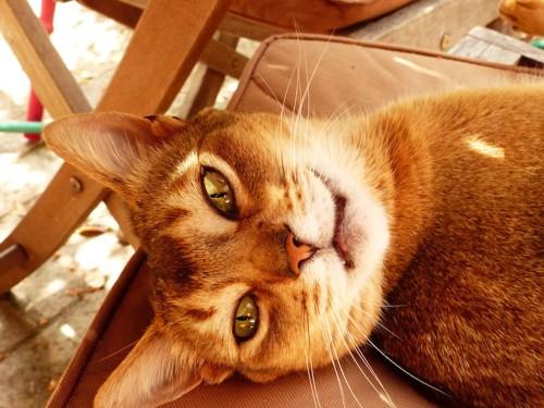 クッションの上に寝転がっている猫