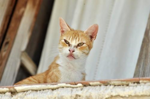 嫌そうな顔をする猫