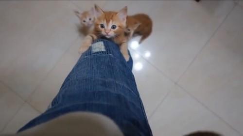 次に登る猫