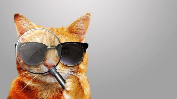 サングラスをかけ、虫眼鏡をのぞいている猫