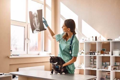 レントゲン写真を見る獣医