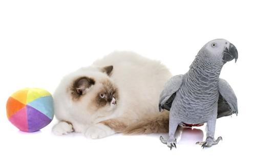 横を向くオウムを見つめる猫