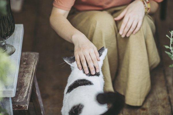 撫でられる白黒猫の後ろ姿