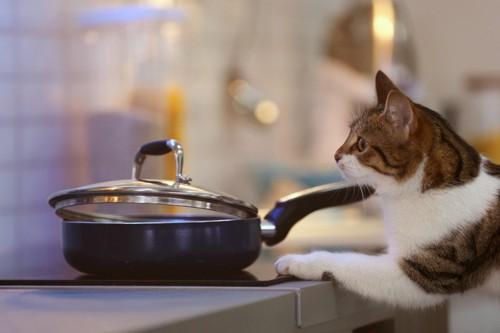 鍋の様子を見ようとする猫
