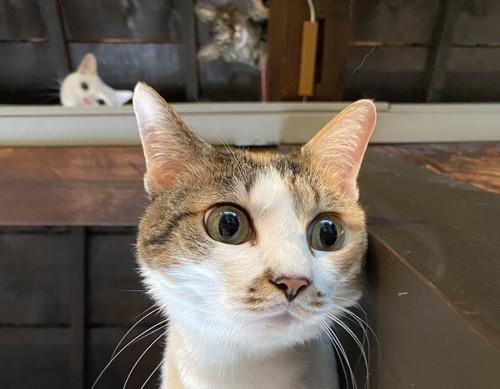 猫の背後霊写真1