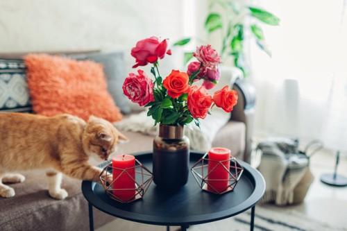 花びんや蝋燭に触れる猫