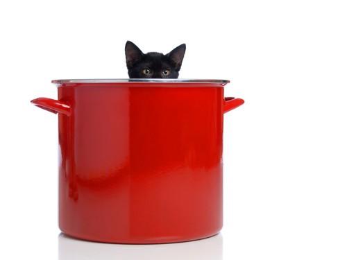 赤いなべから顔を出す猫