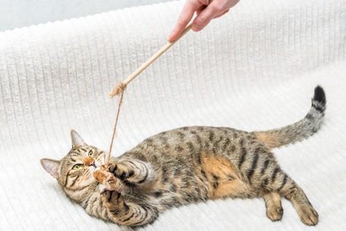 手作りおもちゃで遊ぶ猫