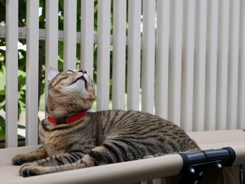 自宅内の庭でくつろぐ猫の様子
