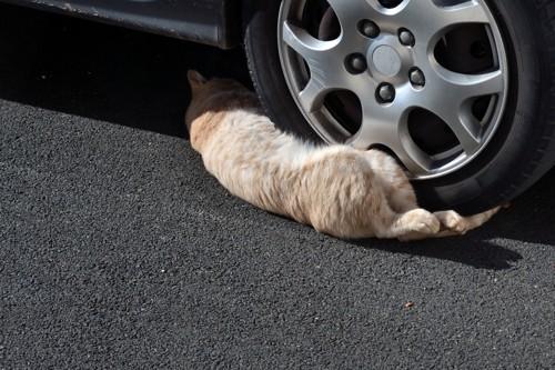 タイヤの隙間に潜り込む猫