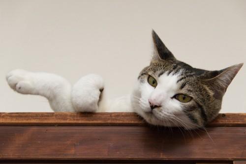 戸棚の上からこちらを見る猫