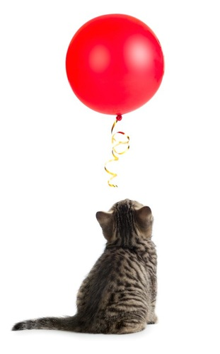 赤い風船を見つめる子猫の後ろ姿