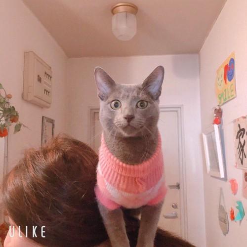 女性の肩に乗ってこちらを見つめる猫