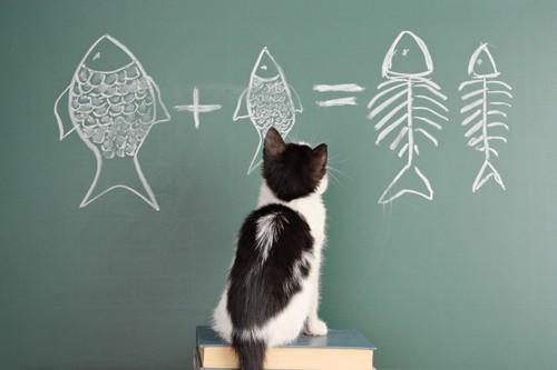 黒板を見つめる猫