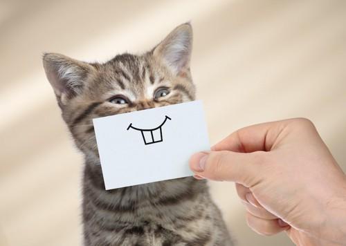子猫の口元にイラストが描かれた紙を当てる人の手