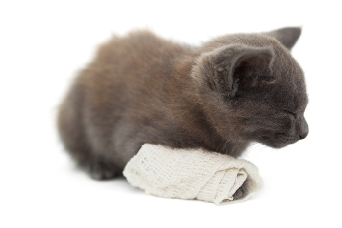 包帯をした猫