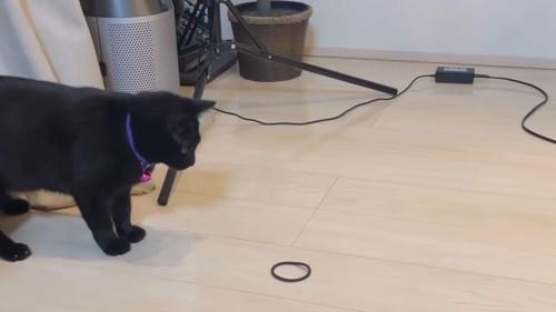 ヘアゴムを見つめる猫