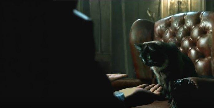 左手を見るアウル・キティ