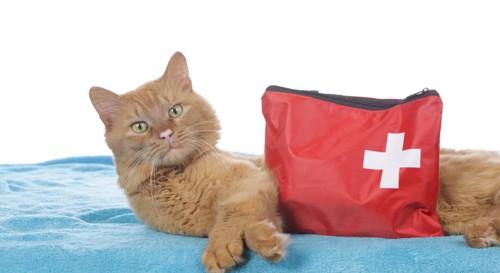 猫と救急セット