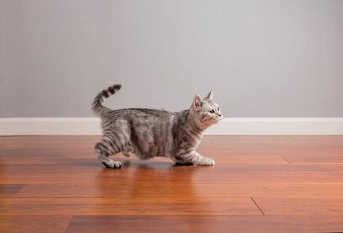 フローリングの上を歩く猫
