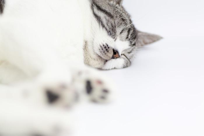 お昼寝ペット