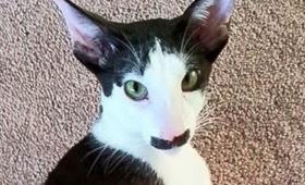 珍しい柄猫1