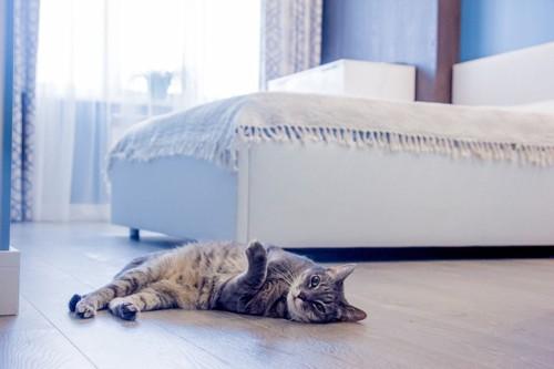ベッドの床で寝る猫