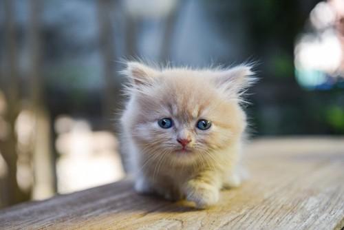 タオルの上の子猫