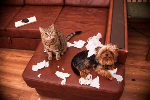 ティッシュで悪戯する犬と猫