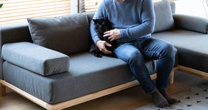 petシリーズソファに座る男性と猫
