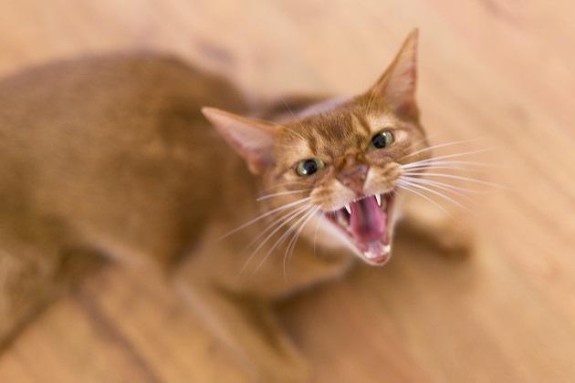ストレスがある猫