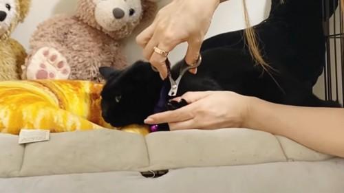 爪切りをする黒猫