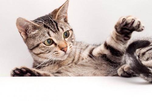 しっぽにじゃれる猫