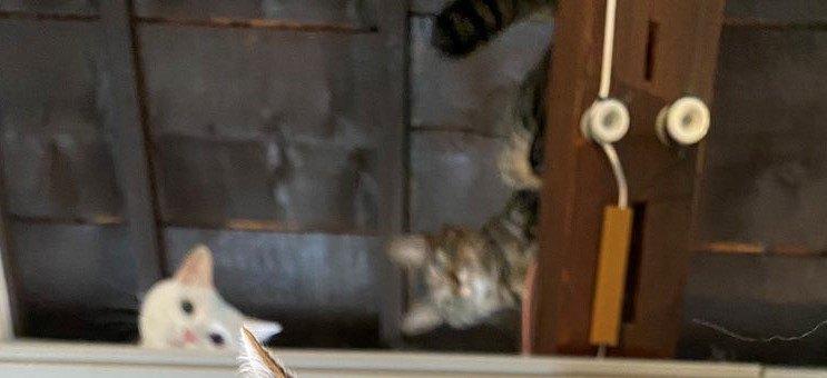 尻尾がボワっとしている猫