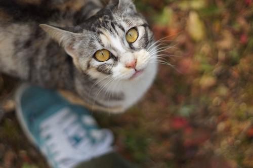 人の足元に近づいて見上げる猫