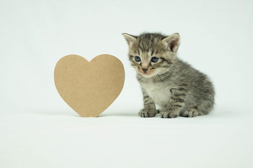 ハートマークと子猫