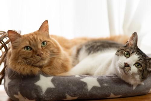 仲良しの猫たち