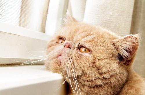 髭を下げて退屈そうに窓の外を見る猫