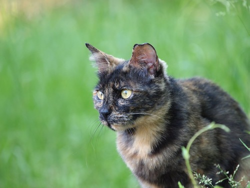 草原の中で遠くを見るサビ猫