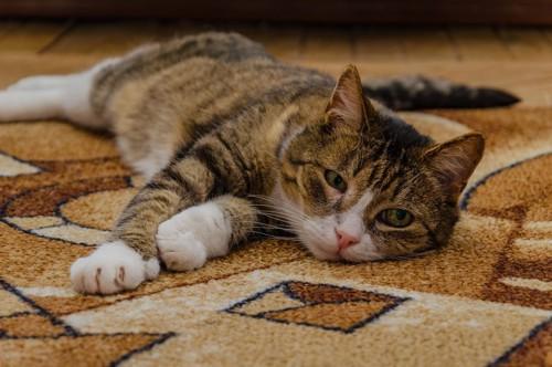 伏せ寝で辛そうな猫