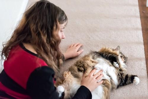 女性にお腹を撫でられる猫