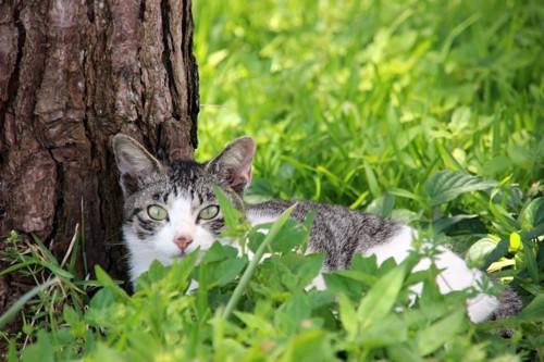 屋外にいる猫