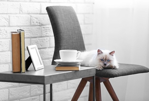椅子の上で寝そべる猫