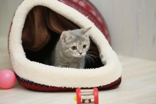 ドーム型ベッドの中で遊ぶ子猫